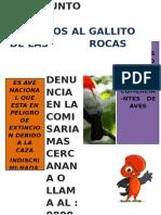 Afiche Gallito