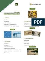 Biologia - aula 04 - apostila-relacoes-biologicas.pdf