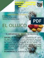 El Olluco Ppt.pptx333