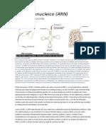 Ácido ribonucleico