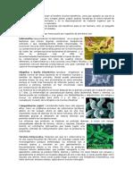 biología reino bacteria