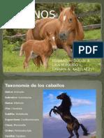 equinos 1.pptx