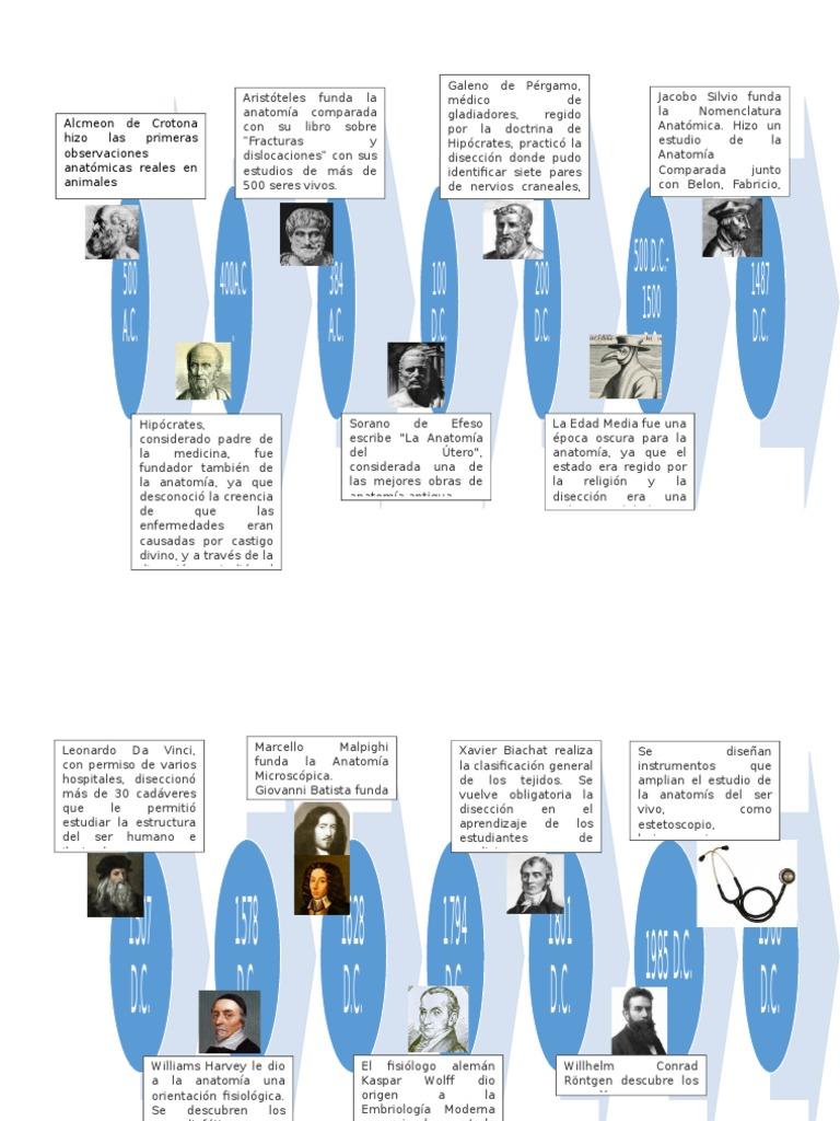 Moderno Anatomía Humana En Línea Galería - Anatomía de Las ...