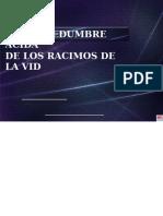 Fitotopatologia La Levadura