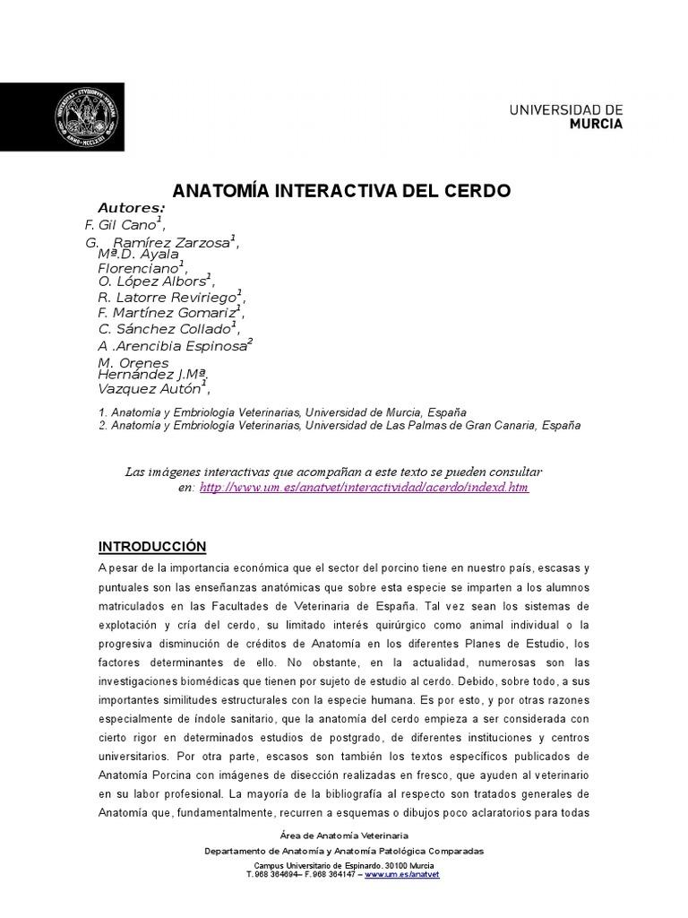 Hermosa Diagrama De La Anatomía Cerdo Fetal Molde - Imágenes de ...