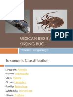 Mexican bed bug.pptx