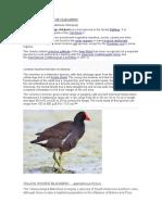 Aves en La Laguna de Huacarpay