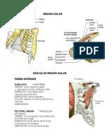 musculosregionaxilar-090527111234-phpapp01
