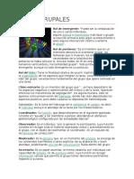 95001394-Roles-Grupales.docx