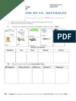 EVALUACION 1° UNIDAD  CIENCIAS NATURALES.doc