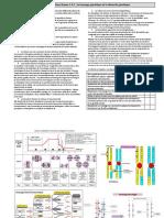 Fiche1-theme1-A-1-brassage-genetique.pdf