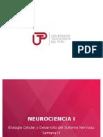 CLASE_3-NEURONA-SINAPSIS-NEUROTRANSMISORES__46132__.pptx
