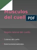 Músculos Del Tronco.jpg