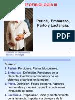 Embarazo, Parto y Lactancia MORFO III 1
