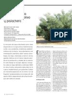 Riego Deficitario en Pistachero y Olivar