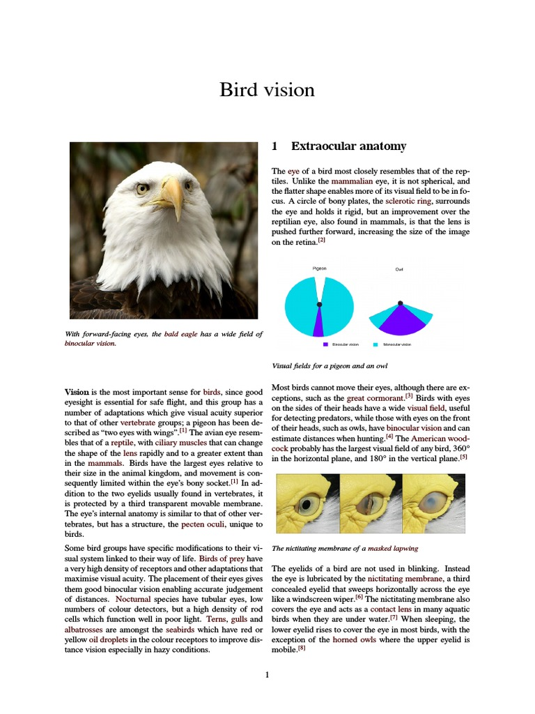 Bird Vision | Eye | Retina