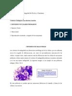 Criterios Generales de Malignidad Del Nucleo y Citoplasma