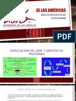 Duplicación Del ADN y Síntesis de Proteínas (2)