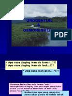 7 urogenital & osmoregulasi.pptx