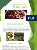 COSECHA Y POST COSECHA DE CAMU CAMU.pptx