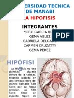 exposicion-hipofisis