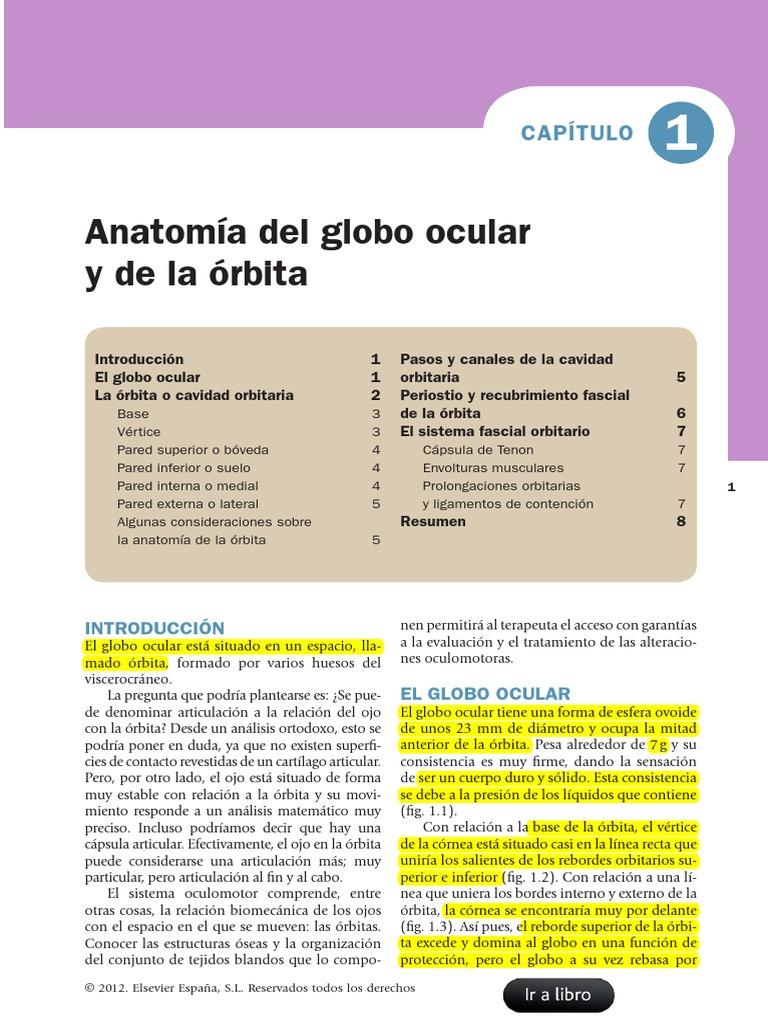 Famoso Hoja De Cálculo De La Anatomía Del Ojo Foto - Imágenes de ...