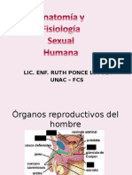 2. Organos Reproductivos