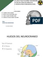Exposicion Anato 1 Neurocraneo