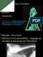 2017 1 Aspergillus, Penicillium e Fusarium 2