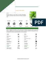 Bromeliad Racinaea Fraseri