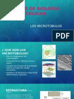 microtubulos-160604231338