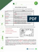 articles-26583_recurso_pauta_pdf.pdf