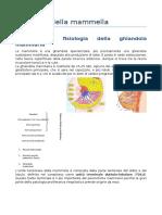 Patologia Della Mammella2