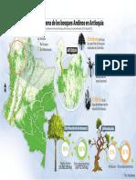 Gráfico bosques andinos