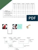Simple Phylogenetic Tree