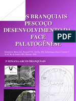 EmbrioArcosPescoçoFacePalato MED 20162