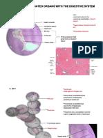 Assoc Digestive Organs.pdf