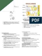Unidad 7 Infografia y Textos Descriptivos