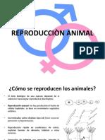 REPRODUCCIÒN ANIMAL.pptx