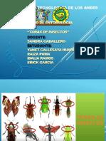 Entomologia Ida