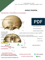 Anatomia Atlas Clase 1 Huesos de Craneo y Cara