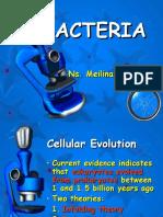 Bacteria Fix Mel