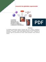 Secreción Hormonal de Las Glándulas Suprarrenales