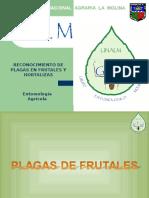 Entomologia Agricola GEM - Frutales - segundo repaso.ppt