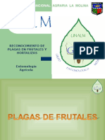 Entomologia Agricola GEM - Frutales - Segundo Repaso