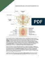 2do depa IBC_MARIA.pdf