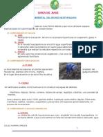 LINEA DE  BASE (Autoguardado).docx