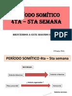 Clase 15. Periodo Somitico 4ta-5ta Semana