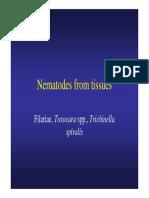 Nematodes From Tissues