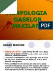 Curs 3 Morfologie- Maxilar